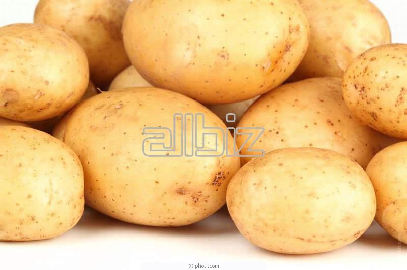 شراء Pomme de terre