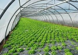 شراء Greenhouses