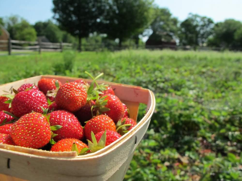شراء Fresh strawberry IQF